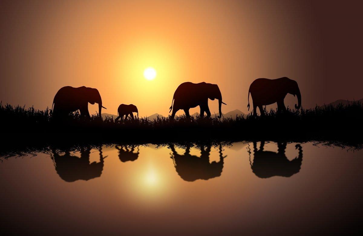 elephants-3863475_1920-1200x782.jpg